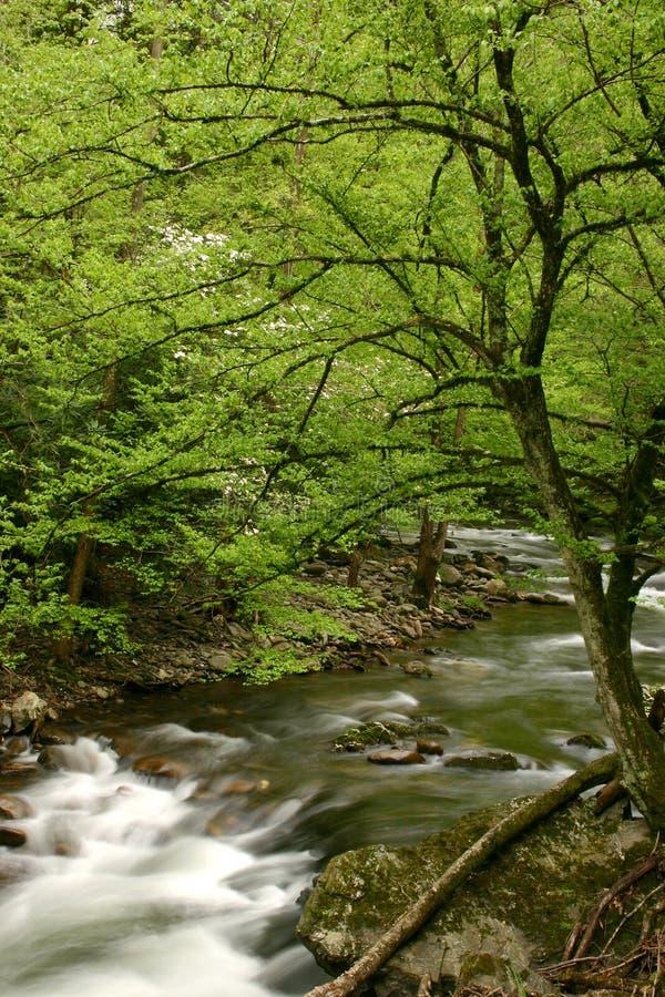 Vert neuf de source photo libre de droits