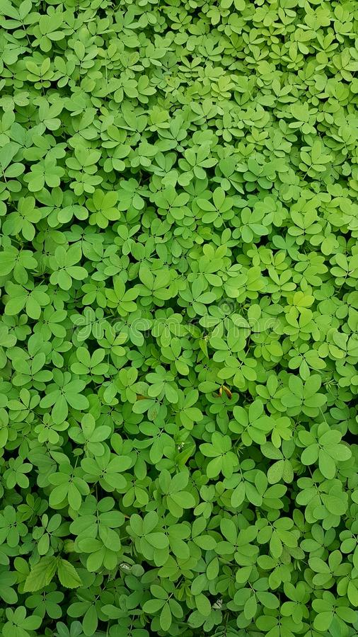 Vert pur image stock