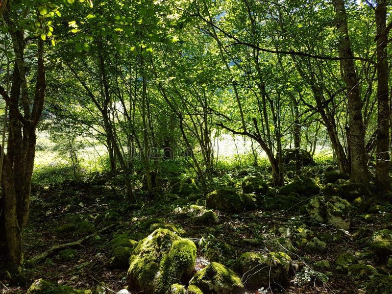 Vert-symbole de nature photographie stock