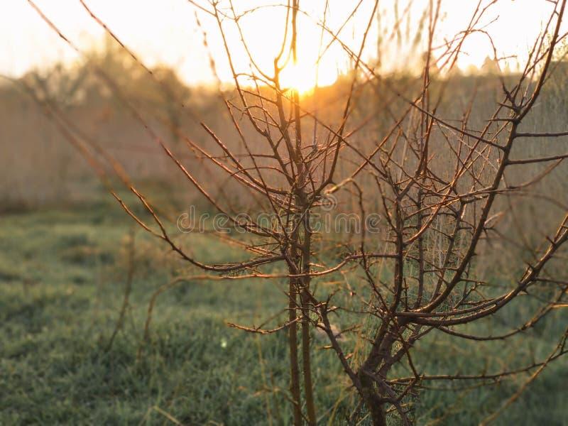 Vertakt de silhouet mooie naakte boom zich zonder bloemenstruiken zonder blad tegen achtergrond van de wolken de blauwe hemel op  royalty-vrije stock afbeeldingen