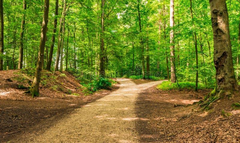 Vertakte wegen in groen bos royalty-vrije stock afbeeldingen