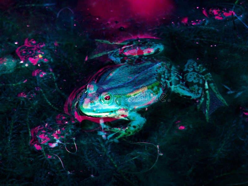 Vertebrate, Underwater, Marine Biology, Organism stock image