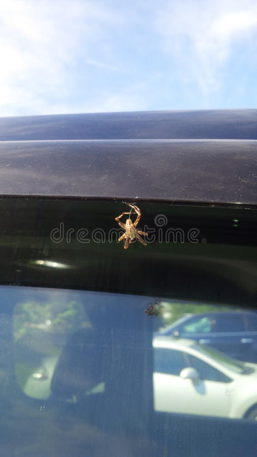Vertente da aranha fotos de stock royalty free