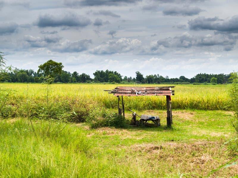 Vertente no campo do arroz fotos de stock royalty free