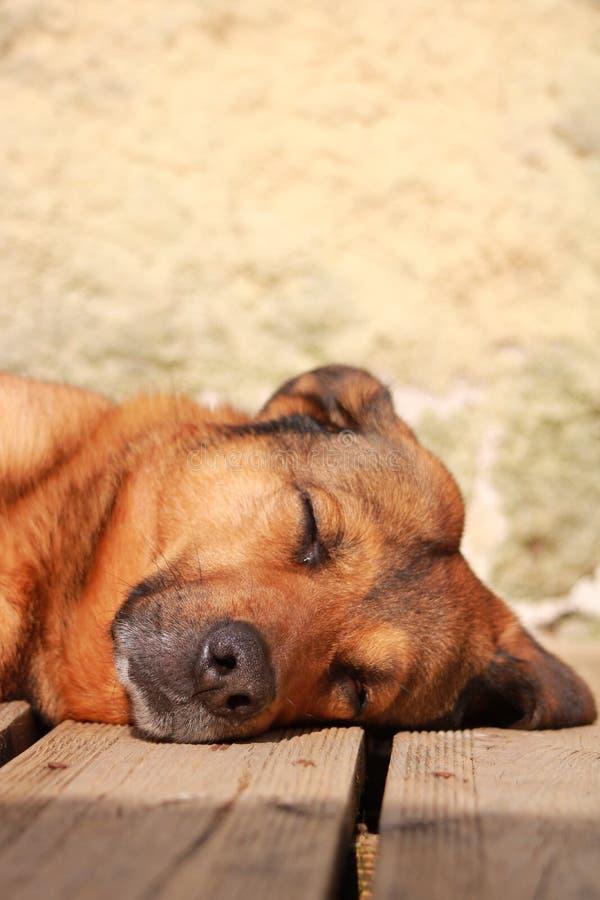 Verticaal van een mooie bruine hond wordt geschoten die op de grond liggen die stock foto