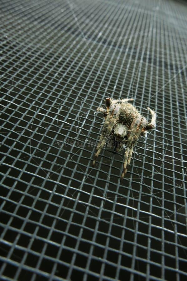 Verticaal van spin op het schermdeur die wordt geschoten stock foto's