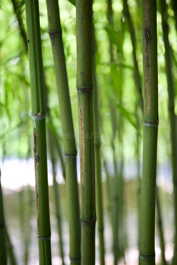 Verticais de bambu foto de stock royalty free