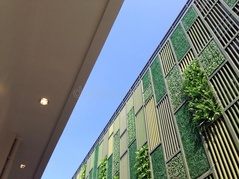 Vertical ściany ogród zdjęcia royalty free