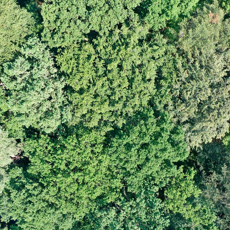 Vertical aerial view of a deciduous forest with dense canopy, green texture and pattern royalty free stock image