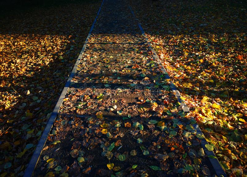Vertical autumn path covered with leaves background royalty free stock images