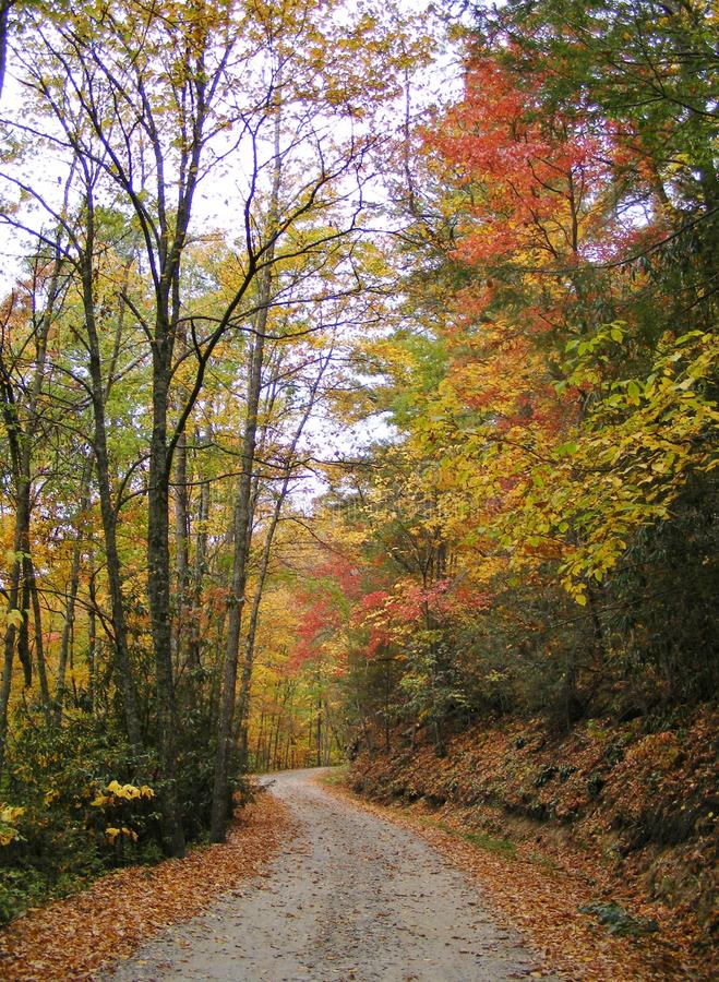VERTICAL BACK ROAD WITH FALL FOLIAGE COLORS IN THE WOODS royalty free stock photo