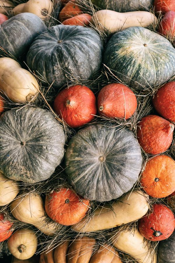 Vertical background base round green pumpkin orange mini set of vegetables natural eco harvest royalty free stock photography