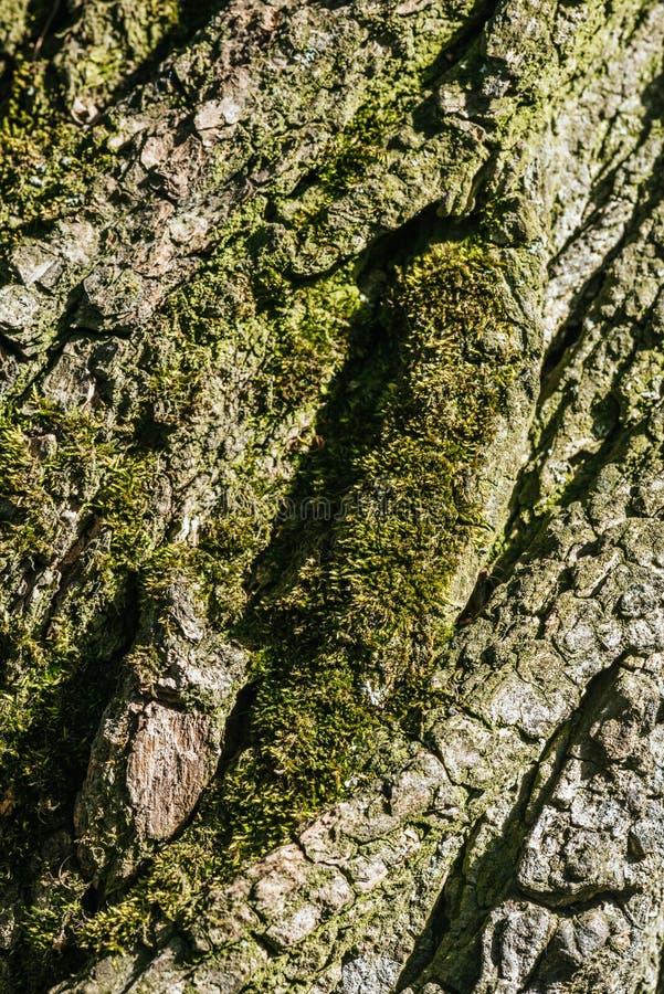 vertical background of tree bark stock image