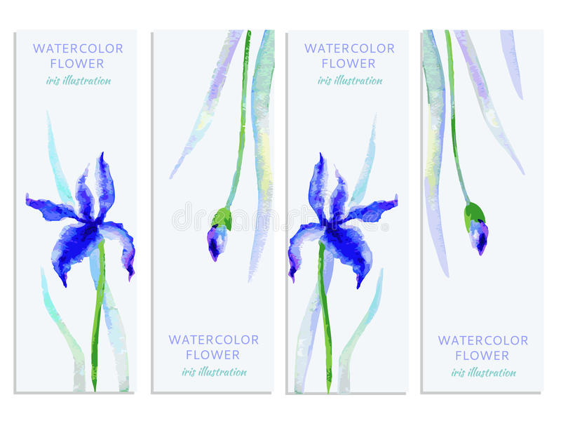Vertical banners set with watercolor iris and leaves, Vector hand drawn illustration, decorative frame, floral label for stock illustration