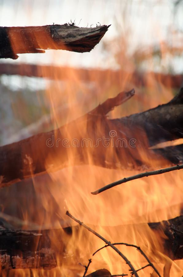 Vertical closeup of black dry wood burning in a campfire. Perfect for a wallpaper royalty free stock photography