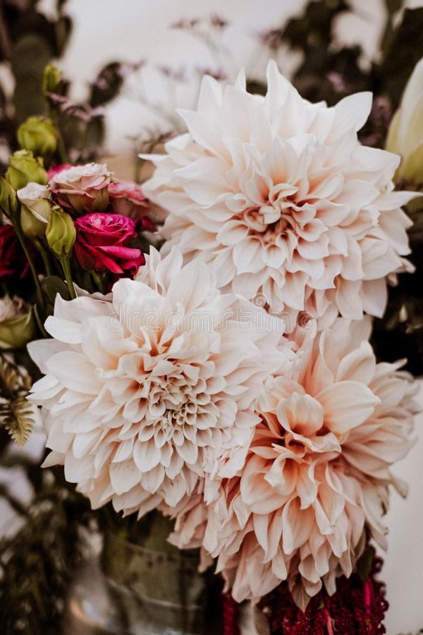 Vertical closeup shot of beautiful white flowers with blurred background. A vertical closeup shot of beautiful white flowers with blurred background royalty free stock photos