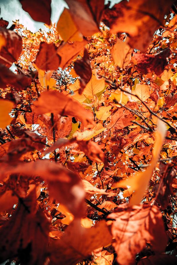 Vertical closeup shot of brown and orange leaves with a blurred background at daytime. A vertical closeup shot of brown and orange leaves with a blurred stock photos