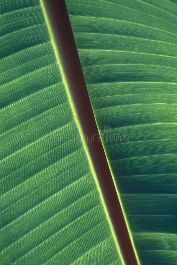 Vertical closeup shot of green leaf patterns and texture royalty free stock photography