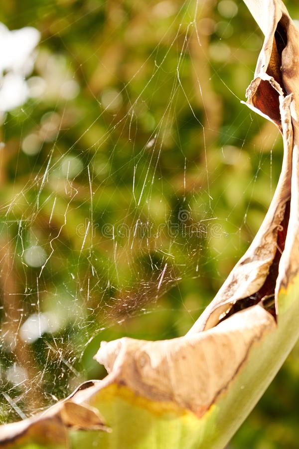 Vertical closeup shot of a spider web on a big dead leaf in a garden stock photos