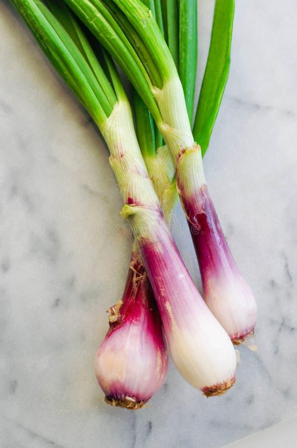 Vertical closeup shot of spring onions. A vertical closeup shot of spring onions stock image