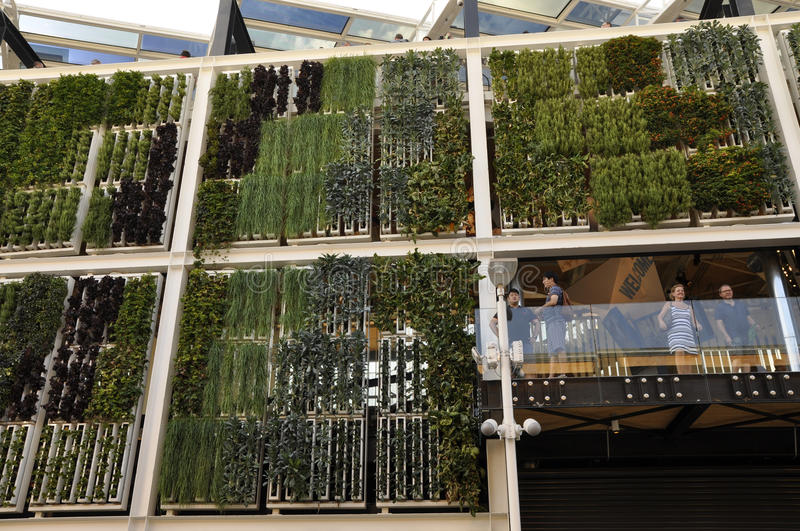 Vertical cultivations at EXPO, in Milan royalty free stock image