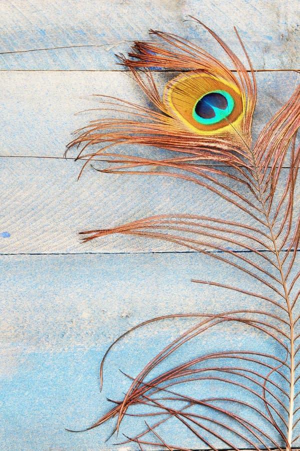 Vertical de la pluma del pavo real fotografía de archivo libre de regalías