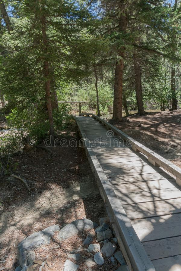 Vertical, Fawn Lakes wooden pathway in New Mexico. One of the pathways which lead to the small ponds which make up the Fawn lakes in New mexico royalty free stock image