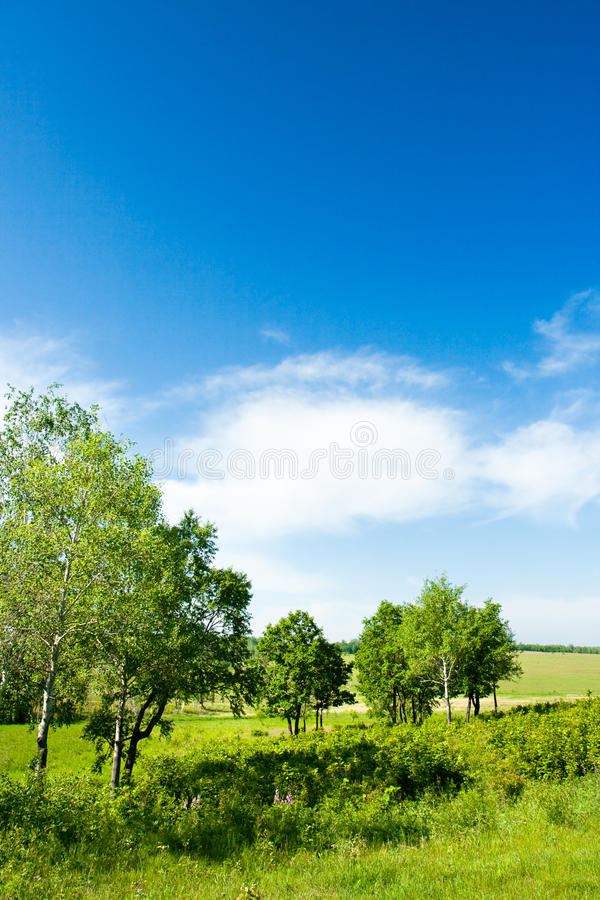 Vertical forest landscape royalty free stock images