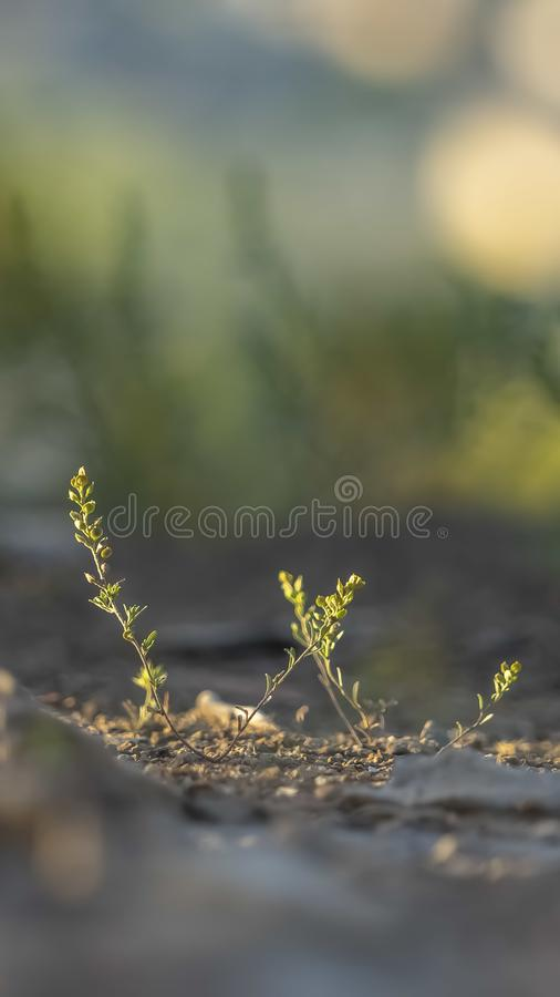Vertical frame Close up of small plant with fragile and vibrant green leaves in the forest royalty free stock photos