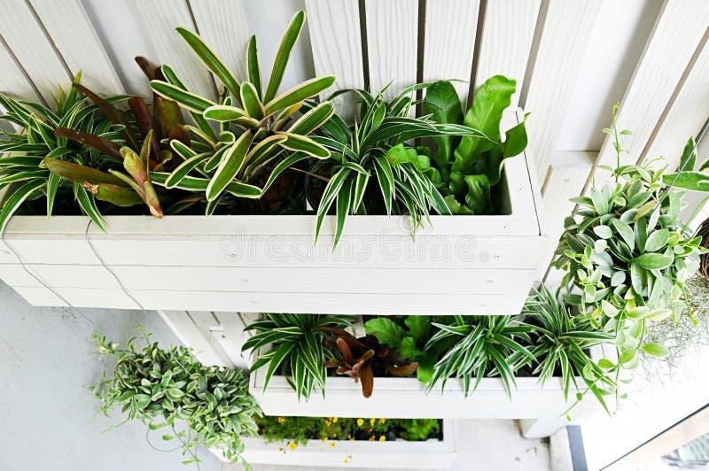 Vertical garden stock images