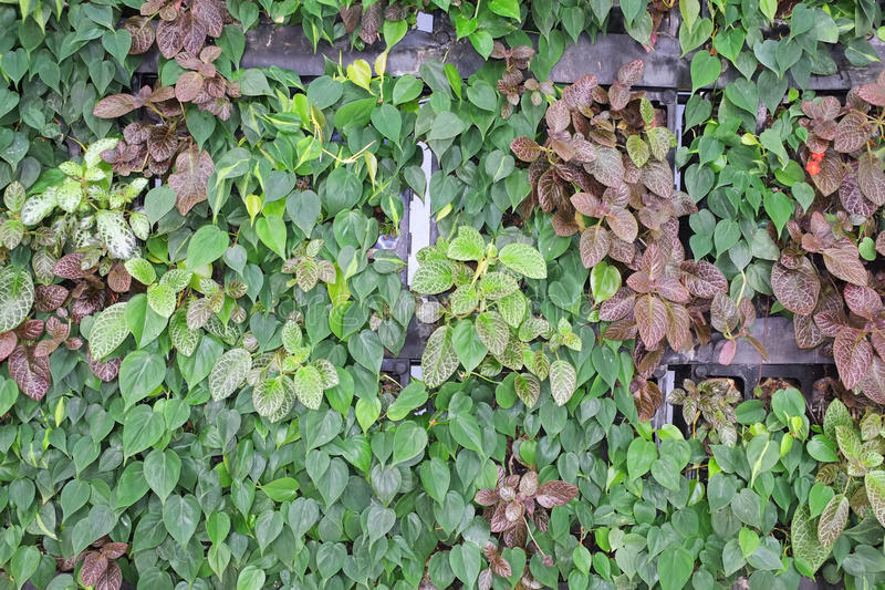 Vertical Garden stock image