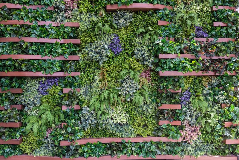 Download Vertical Garden Wall Background Stock Photo   Image Of Background,  Bright: 104883822