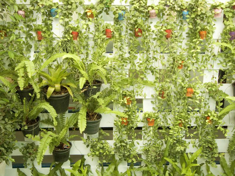 Vertical garden on white wood royalty free stock photo