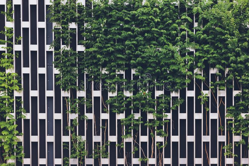 Vertical gardening on a metal chrome grid royalty free stock photo