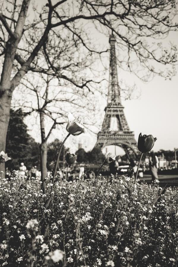 Vertical greyscale low angle shot of beautiful flowers with the Eiffel Tower in the background. A vertical greyscale low angle shot of beautiful flowers under a royalty free stock image