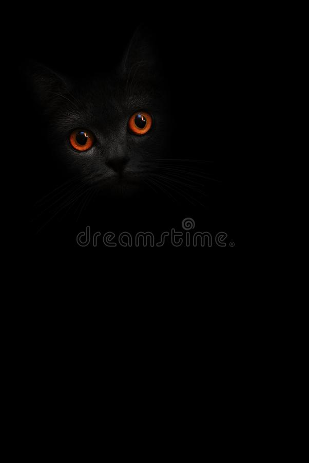Vertical image black cat portrait with orange eyes is looking out of the shadow on the black background. Cute dark kitten. Cat hea royalty free stock image