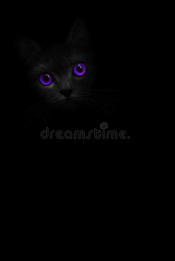 Vertical image black cat portrait with violet purple eyes is looking out of the shadow on the black background. Cute dark kitten. stock images