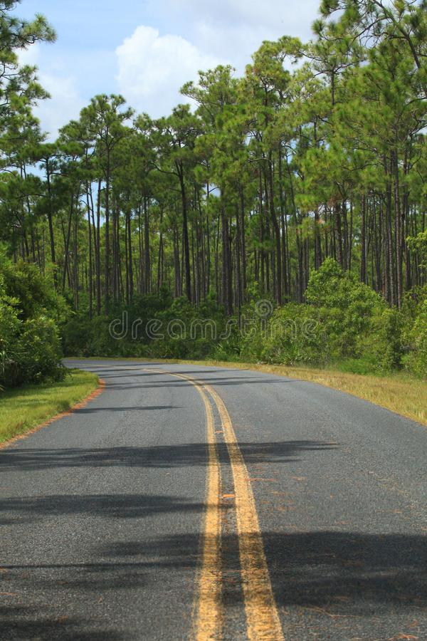 A roadway in Everglades National Park, FL. A vertical image of a double yellow lined roadway in Everglades National Park, Florida stock photography