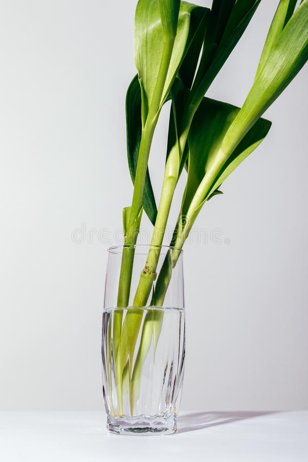 Vertical image of flower stems in a glass. Vertical image of flower stems in a transparent glass with water, close-up stock image