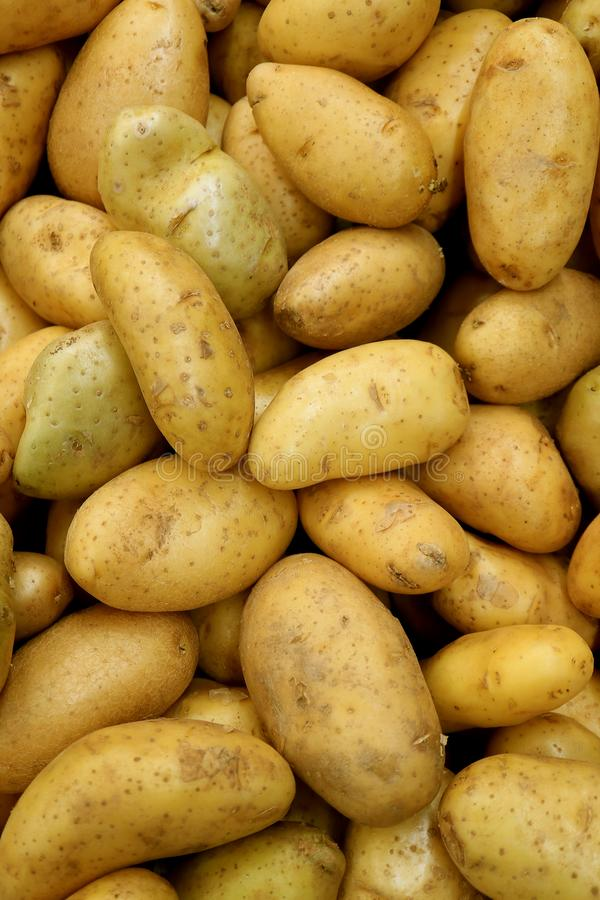 Vertical Image of Heap of Fresh Law Potatoes, Top View for Background. Or Banner abundance agriculture brown bunch carbohydrate close closeup cooking delicious royalty free stock images