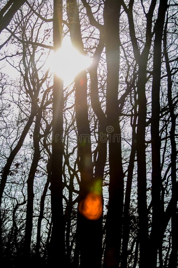 Vertical image of silhouettes of trees, sharp sunlight stock photography