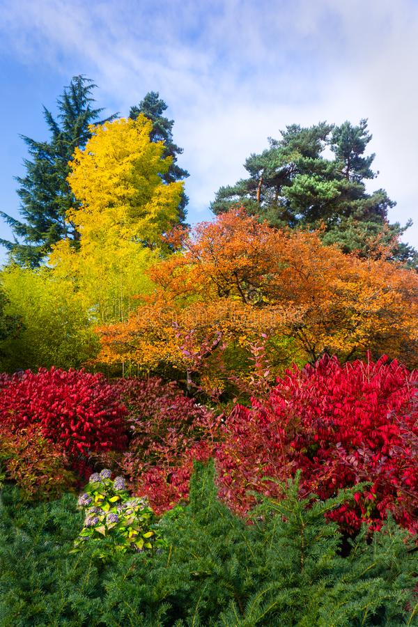 Vertical image trees in bright colors of fall autumn foliage,. Cluster of trees and shrub bushes in brilliant fall colors. The vertical orientation is useful as stock images