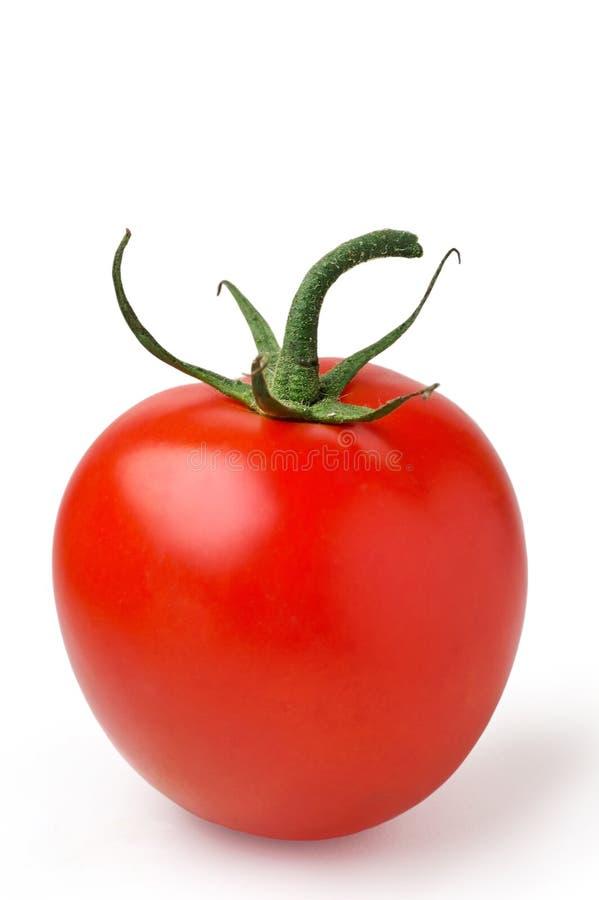 Vertical isolado do tomate foto de stock