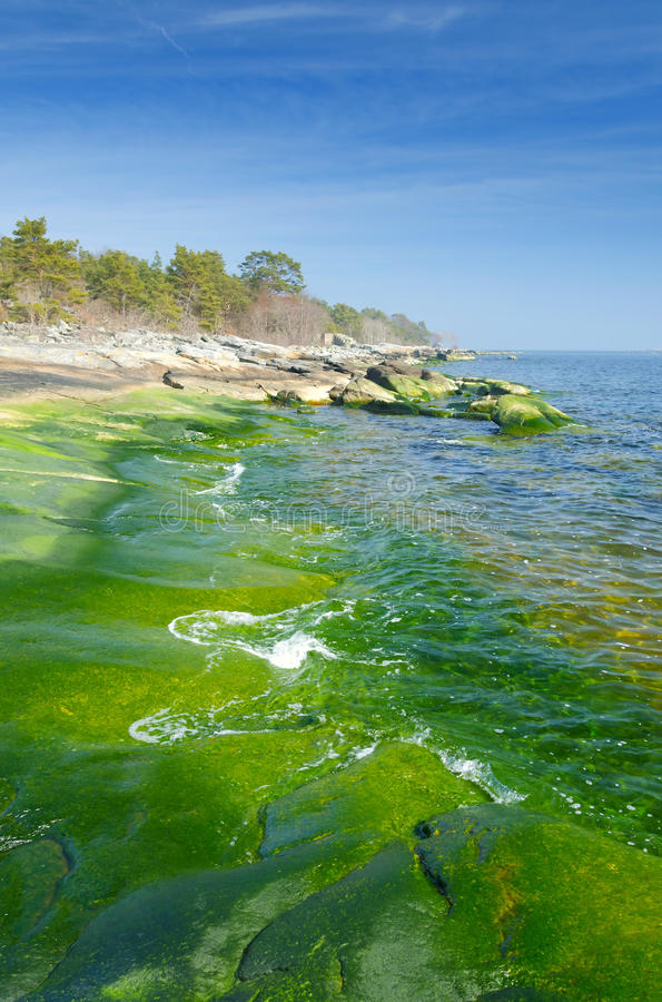 Vertical Landscape Of Green Coast Stock Photography