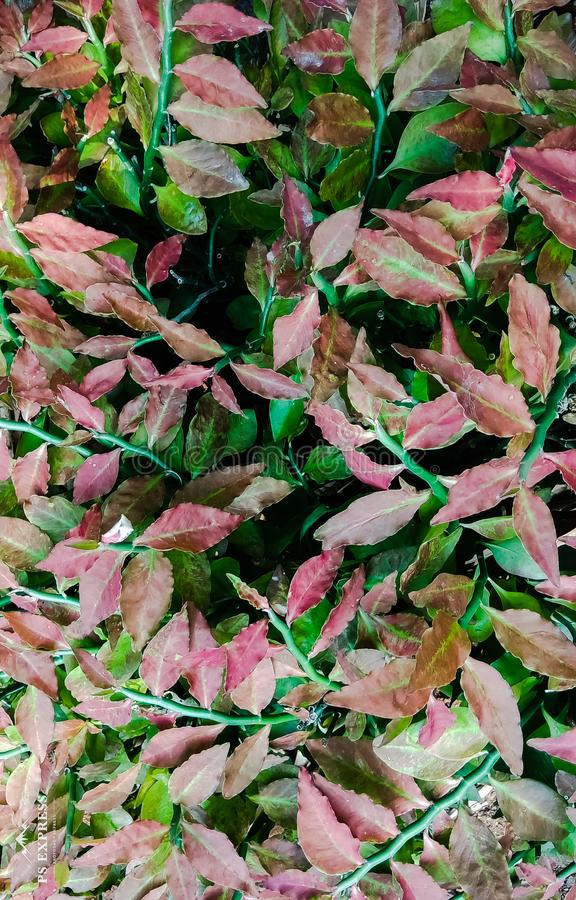 Vertical natural background pattern of colourful leaves royalty free stock photos