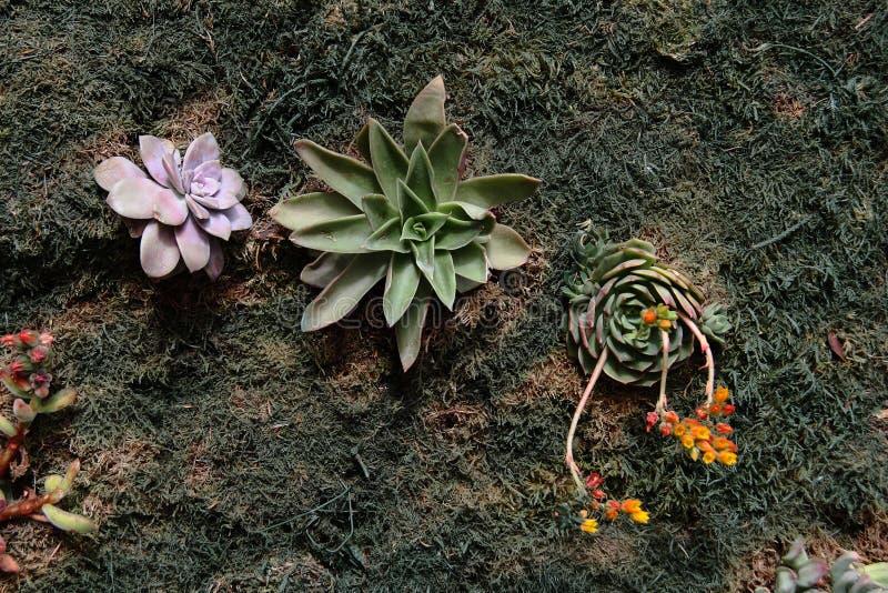 Vertical ogród sukulenty zdjęcie stock