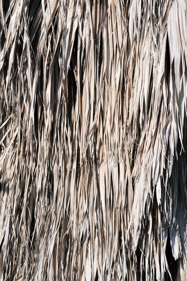 Download Vertical Palm Thatch Backgrouind Stock Photo - Image: 14881052