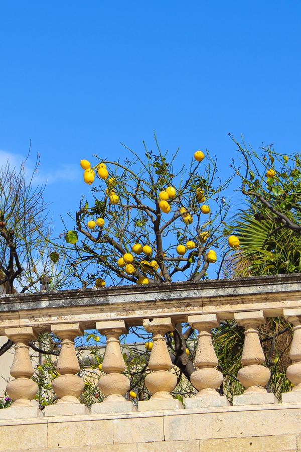 Vertical photo capturing lemon tree with ripe lemons on historical terraces close to Santa Lucia Church on Piazza Duomo Square. In Ortigia Island, Syracuse stock photography