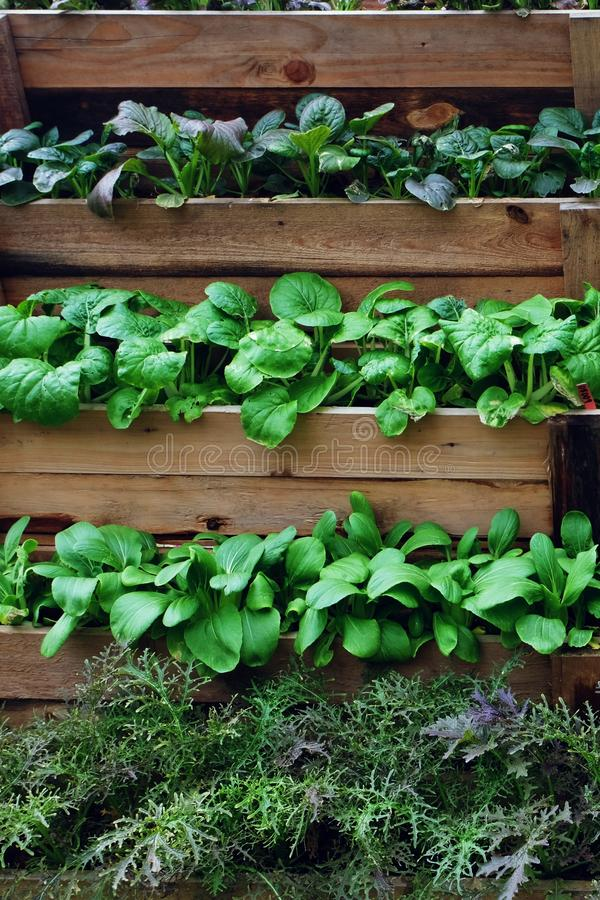 Vertical plant farming for growing many plant varieties in limited area stock photos