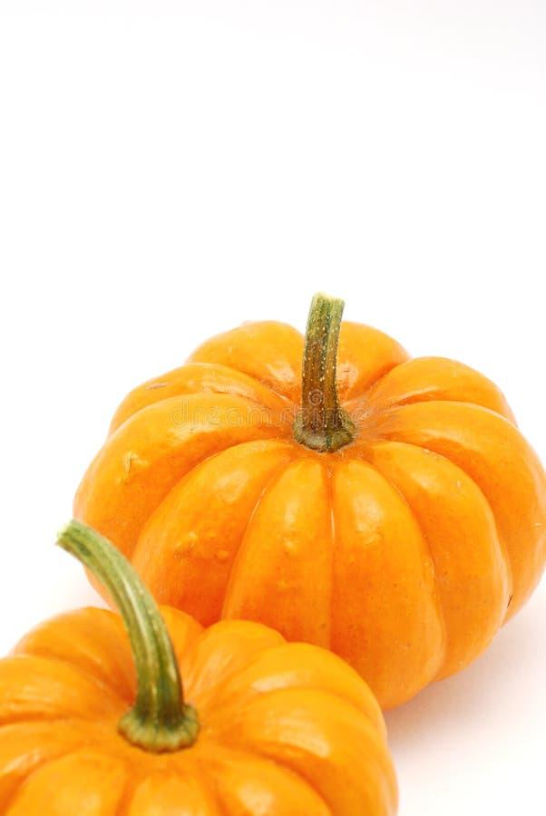 Vertical Pumpkins over stock image